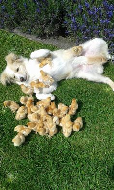 12 Adorable Dog Moms Fostering Other Animals | Rover Blog