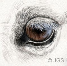 Draw and Paint Horses' Eyes: Grey and White