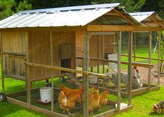 large chicken tractors with full size door. Not sure how easy they would be to move but I like their design