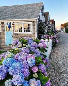 Coastal Gardens, Coastal Homes, Landscaping Plants, Front Yard Landscaping, Landscaping Ideas, Hydrangea Landscaping, Landscape Design, Garden Design, Hydrangea Garden