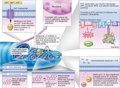 Your Mighty Mitochondria.  Mitochondria are the energy centers of our cells - the engines - and they're REALLY IMPORTANT!