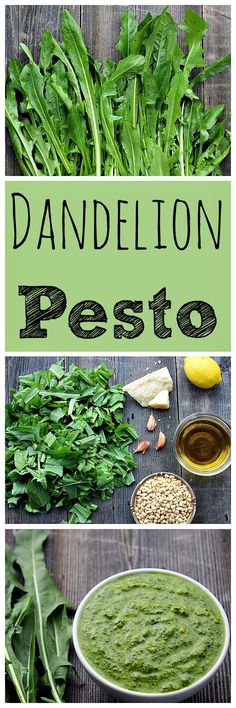 Go foraging for dandelion greens, then make this bright and nutritious dandelion pesto! Go foraging for dandelion greens, then make this bright and nutritious dandelion pesto! Pesto, Dandelion Recipes, Whole Food Recipes, Cooking Recipes, Coffe Recipes, Achiote, Vegetarian Recipes, Healthy Recipes, Edible Plants
