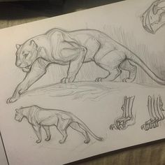 More prehistoric kitty doodles before bed Nimravides some time known as the false sabertooth by Sketchbook Inspiration, Animal Art, Animal Drawings, Art Drawings, Cat Art, Animal Sketches, Art Sketches, Cat Drawing, Animal Figures