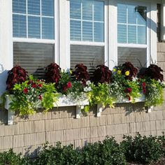 White PVC window boxes with sweet potato vine and coleus
