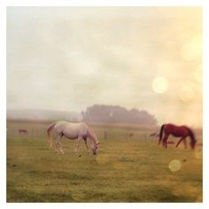Beautiful! Happy! Amazing! Horses