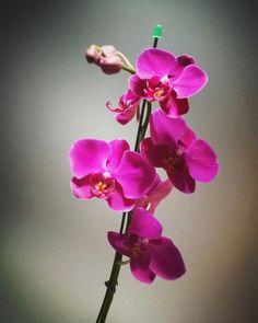 Orquídea Vila Olímpia