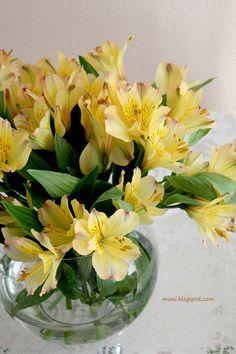 flores lá de casa // astromélias amarelas
