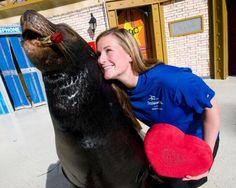 Marine Mammal Trainer Job Description
