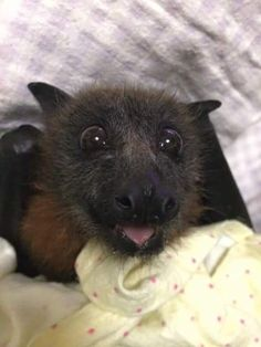 A very happy bat :)