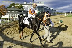 4/30/16.Multiple Grade 3-winning Maryland-bred Ben's Cat is set to make his 10-year-old debut in Sunday's fourth race at Laurel Park, a 5 ½-furlong sprint on the Fort Marcy Turf Course. Bred, owned and trained by Hall of Fame horseman King Leatherbury, Ben's Cat drew outside post 9 in the $52,000 allowance and will have current … Love this horse. Hope he does well and stays healthy.