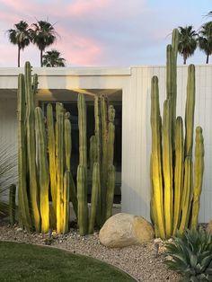 Gorgeous Cactus Posts palm springs Landscape
