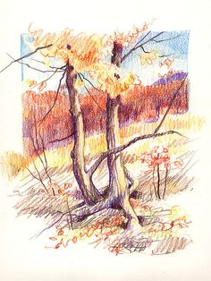 Colored pencil on white paper, from my Sierra Club Guide to Sketching in Nature. Landscape Drawings, Landscape Art, Colored Pencil Artwork, Colored Pencils, Color Pencil Sketch, Zentangle Drawings, Pastel Art, Pencil Illustration, Gravure