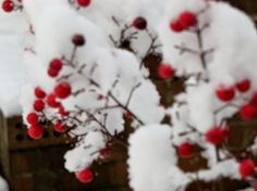 Faith, Folklore, and Friends: Sunday Scripture: Scarlet and Snow