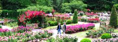 Take in the glorious views at Portland's International Rose Test Garden - a testing ground for new rose varieties.