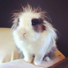 Bunny's hair icon is Einstein - July 13, 2012