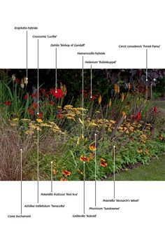 Plant combinations with the reds of Crocosmia 'Lucifer' and yellows of Achillea 'Terracotta. Landscaping Plants, Garden Plants, Plant Design, Garden Design, Planting Plan, Herbaceous Perennials, Mediterranean Garden, Garden Borders, Natural Garden
