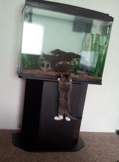 My curious kitten - Imgur
