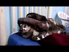 Four minutes of distraction. Don't try to figure out who put this sloth with this cat, it's futile. Instead, we suggest focusing on how much this sloth loves this cat.
