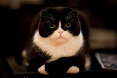 Cats Who Think They Are Extremely Disappointed In You:  For as long as these animals have been known, naturalists have been at a loss to explain the scientific reasons behind their severe facial expressions and implacable body language. The prevailing theory is that these idiosyncratic physical features are a result of the fact that you have let them down for the last time.