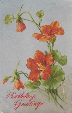BF82.Vintage Greetings Postcard.Nasturtiums | eBay