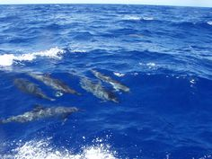 Spinner dolphins   Lanai, Hawaii Saw this when we were there- very cool