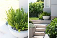Randwick Landscape Design by Secret Gardens - Sydney Landscape Architects Modern Landscape Design, Garden Landscape Design, Contemporary Landscape, Landscape Architecture, Landscaping With Rocks, Modern Landscaping, Backyard Landscaping, Landscaping Ideas, Backyard Designs