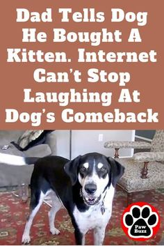 As a pet parent, you'll find yourself desiring to ruin your canine and offer… – Pets Funny Animal Videos, Cute Funny Animals, Funny Animal Pictures, Funny Cute, Cute Cats, Animal Funnies, Dog Videos, Adorable Kittens, Funny Videos