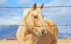 Best Horse - https://www.highdefwallpaper.com/animals/best-horse/ Best Horse is an HD wallpaper posted in animals category. You can download Best Horse HD wallpaper for your desktop, notebook, tablet or phone or you can edit the image, resize, crop, frame it so that will fit on your device.