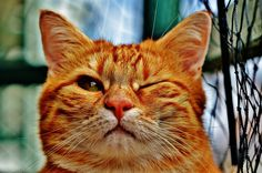 😸 funny cats videos make silly faces 😼 funny cats videos make silly faces in this video you can see Funny Cats Compilation Funny Cat Videos… Funny Cat Videos, Funny Cats, Funny Animals, Cute Animals, Funny Pranks, Funny Humor, Cute Kittens, Kitten Eye Infection, Cool Cats