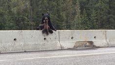 Bear Cub Rescue! Ricky Forbes Via Bored Panda