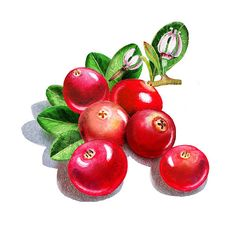 Happy Cranberry Bunch' - http://irina-sztukowski.artistwebsites.com/featured/happy-cranberry-bunch-irina-sztukowski.html