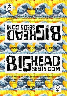 seeds from the legendary San Fernando Valley OG Kush plus San Fernando Valley, Earthy, Seeds, Fire, Pure Products, Grains