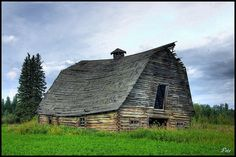 Log Barn outside Edson, Alberta-This looks like my grandfathers barn the day before it fell. It was over 120 years old.