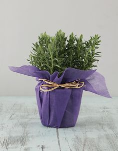 Lavender in Wrapping