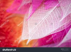 Closeup Nature View Transparent Skeleton Leaf ภาพสต็อก (แก้ไขตอนนี้) 1471938341 Autumn Leaves Background, Leaf Background, Nature View, Close Up, Image