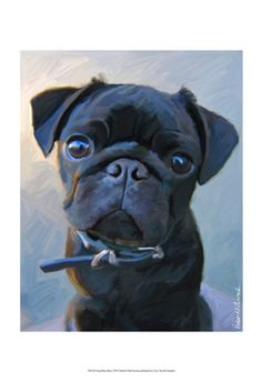 World Art Group, Pug Baby Blue, Robert McClintock