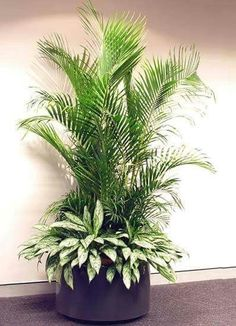 Tall Indoor Plants, Outdoor Plants, House Plants Decor, Plant Decor, Container Plants, Container Gardening, Plantas Indoor, Pot Jardin, Design Jardin