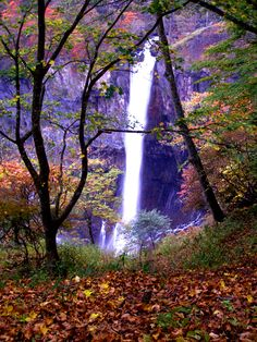 Fall leaves frame Kegon Falls in Nikko, Japan