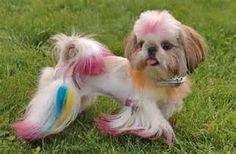 dog hair cuts dog hairstyle