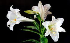 Каждая барышня на самом деле - нежный цветочек. Ну или не нежный, а колючий и ядовитый. Это смотря под каким знаком она родилась. Хочешь узнать, какой ты цветок? Читай наш пятничный гороскоп!