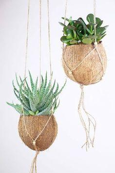{DIY} Succulents in Coconut Shell - Flower Basket with Macram .- {DIY} Sukkulenten in Kokosnussschale – Blumenkorb mit Makramee {DIY} succulents in coconut shell – flower basket with macrame - Suculentas Diy, Cactus Y Suculentas, Hanging Planters, Hanging Baskets, Garden Planters, Garden Basket, Hanging Succulents, Diy Garden, Hanging Plant Diy