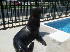 Sea lion habitat at Pirate's Voyage #MYRDreamVacation