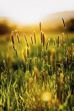 Que beleza o brilho do sol nas plantas,no verde.É uma festa da Natureza.