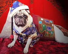 *SMILING PUG* - 恭喜发财! Gong Xi Fa Cai! , HAPPY CHINESE NEW YEAR, LUCKY PUG FOR LUCKY YEAR  *-* by *SMILING PUG*
