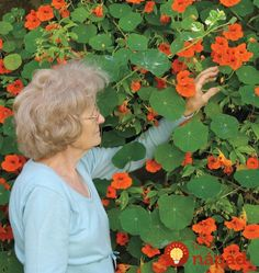 Plant Tall Single Mix Nasturtium Seeds for a trailing plant that will travel great lengths. Use in a planter for a dramatic effect of lively classic colour. Herb Garden, Garden Plants, Cucumber Beetles, Canary Birds, Annual Flowers, Garden Seeds, Companion Planting, Drought Tolerant, Flower Seeds