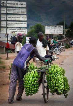 Photos from my trip to Uganda © Miikka Järvinen 2012 - My other posts from Uganda Uganda, Wordpress, Photos, Wildlife, Africa, Pictures