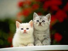 Kittens http://funnyfanatics.com