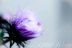 Beautiful Flower ~ https://www.facebook.com/pages/1000-Words-Photography/229325343810597
