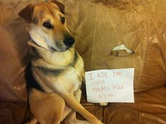 "Literally will throw out a couch this Saturday because the dog ""ate"" it! Dog Shame"