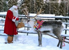 Santa Claus feeding of one of his reindeer in Lapland, Finland